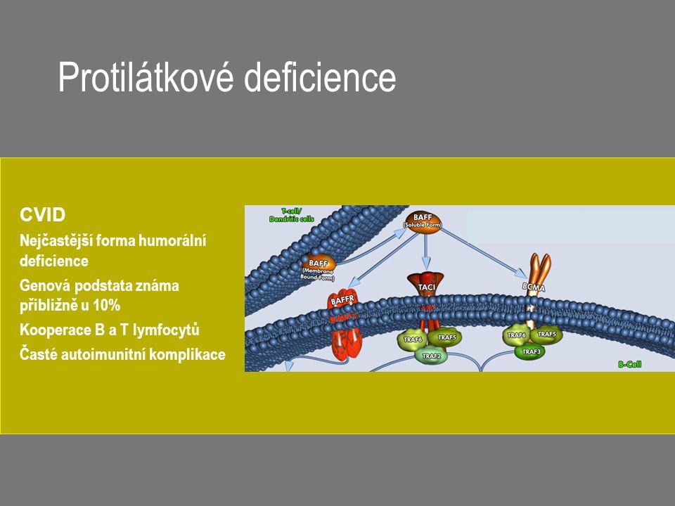 CVID Nejčastější forma humorální deficience Genová podstata známa přibližně u 10% Kooperace B a T lymfocytů Časté autoimunitní komplikace Protilátkové