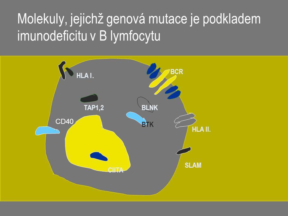 Molekuly, jejichž genová mutace je podkladem imunodeficitu v B lymfocytu BCR BLNK BTK CIITA HLA I. TAP1,2 HLA II. SLAM CD40