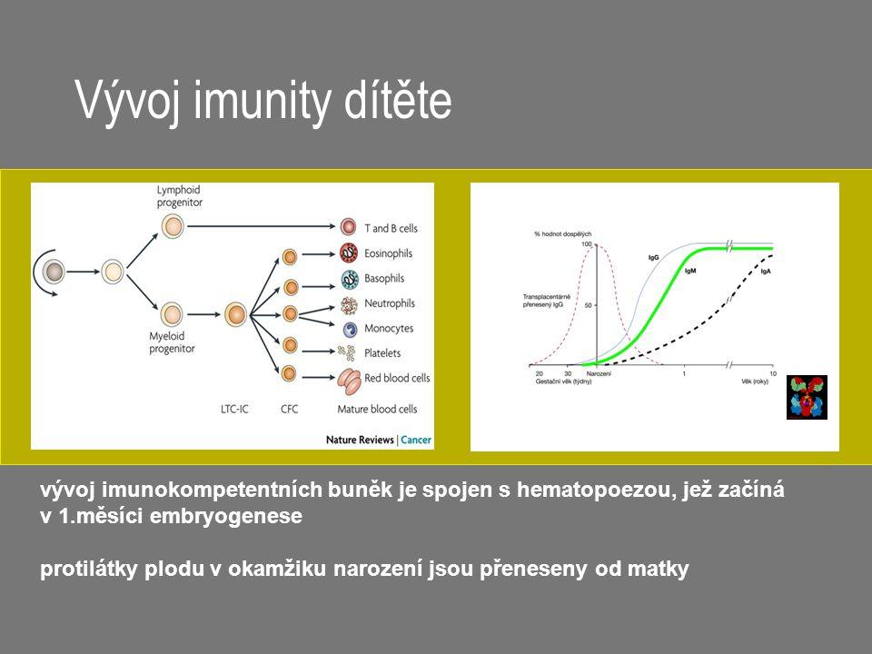 Vývoj imunity dítěte vývoj imunokompetentních buněk je spojen s hematopoezou, jež začíná v 1.měsíci embryogenese protilátky plodu v okamžiku narození