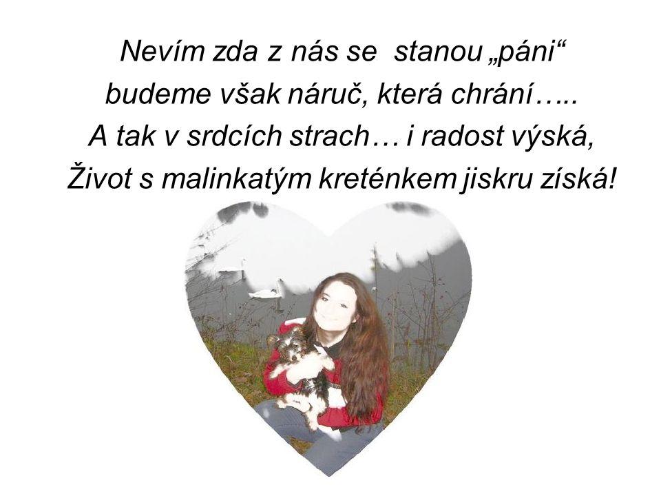 """""""Nejlépe je Jorkšírky, uvazovat na kšírky, zahrnout je tunou lásky, nedělat si z bobků vrásky."""