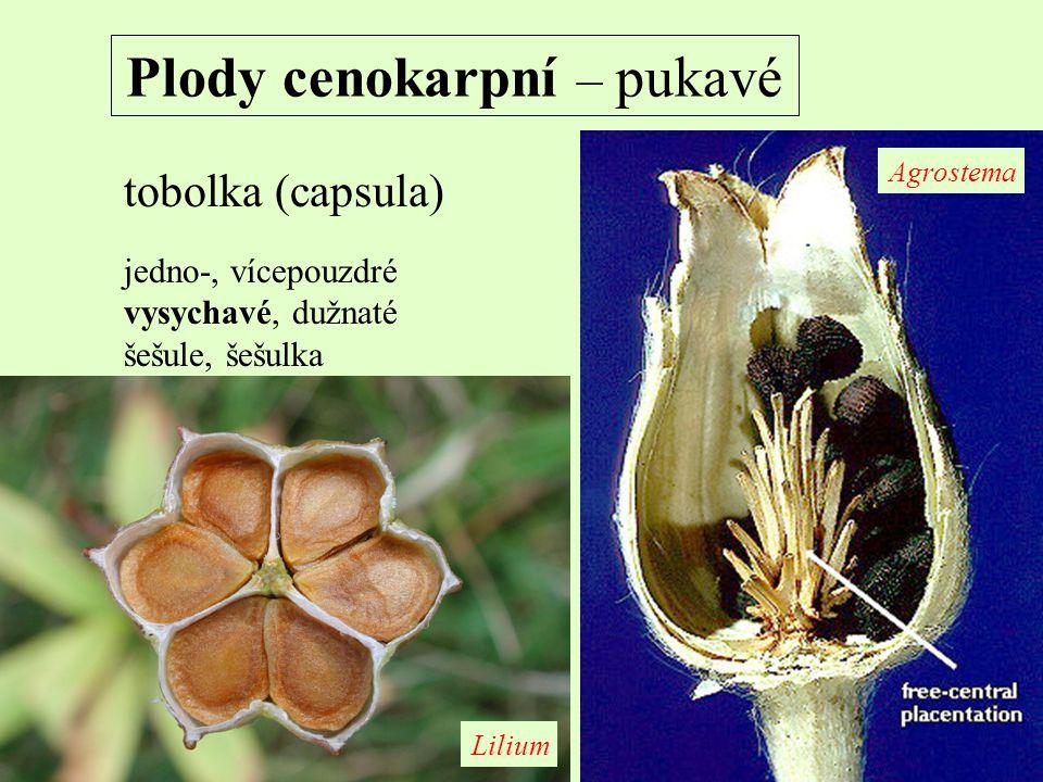 Plody cenokarpní – pukavé tobolka (capsula) jedno-, vícepouzdré vysychavé, dužnaté šešule, šešulka Agrostema Lilium