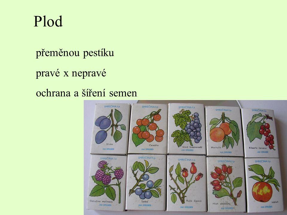Plod přeměnou pestíku pravé x nepravé ochrana a šíření semen