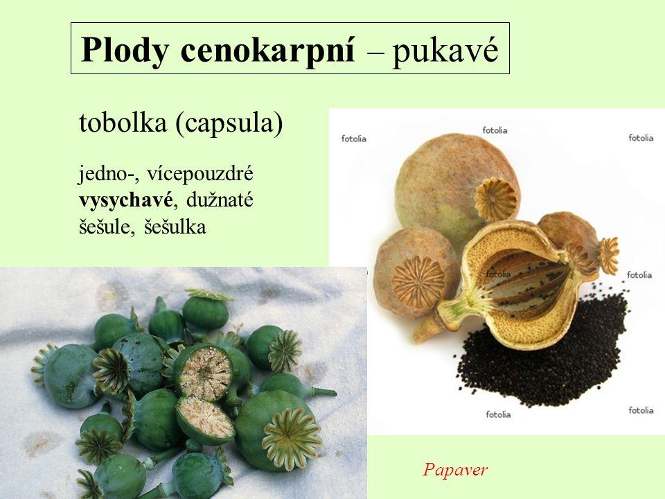 Plody cenokarpní – pukavé tobolka (capsula) jedno-, vícepouzdré vysychavé, dužnaté šešule, šešulka Papaver