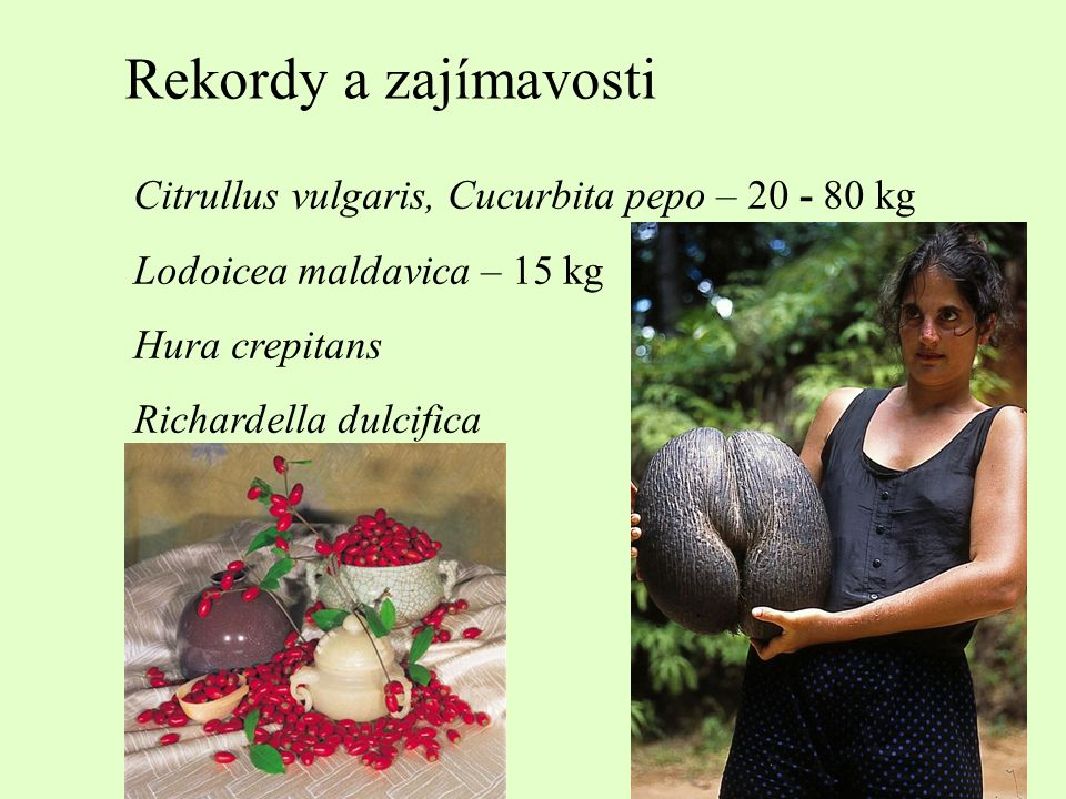 Rekordy a zajímavosti Garcinia mangostan Durio zibethinus