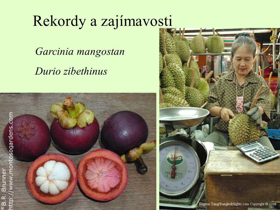 Plody apokarpní – nepukavé nažka (monachenium) jednosemenná kožovité oplodí šíření – háčky, chlupy...