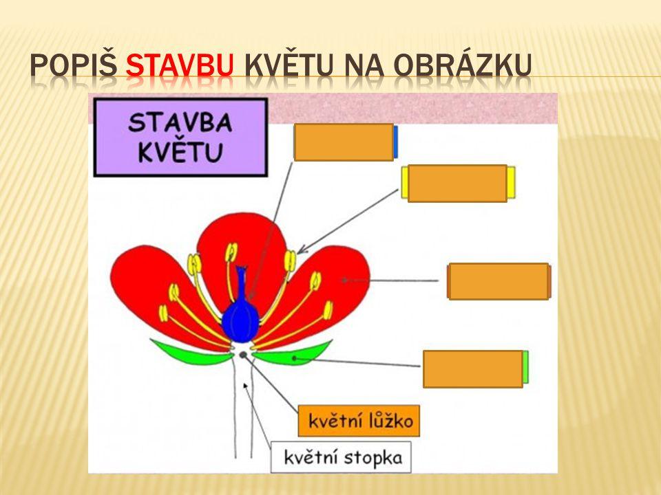  Pestík – samičí pohlavní orgán květu  Tyčinka – samčí pohlavní orgán květu  Pravidelný květ – symetrický, více rovin souměrnosti  Souměrný květ – lze rozdělit na 2 stejné části  Jednopohlavný květ – má pouze tyčinky nebo pestíky  Oboupohlavný květ – má tyčinky i pestíky  Jednodomá rostlina – má samčí i samičí květy  Dvoudomá rostlina – má pouze samčí nebo samičí květy