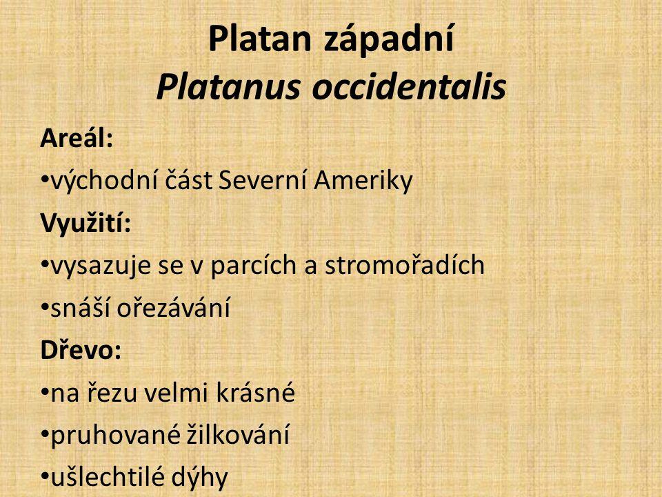 Platan západní Platanus occidentalis Areál: východní část Severní Ameriky Využití: vysazuje se v parcích a stromořadích snáší ořezávání Dřevo: na řezu