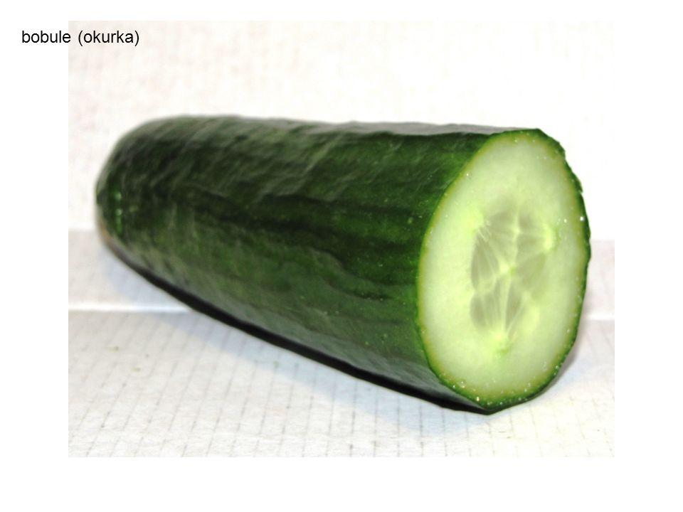 2.Dužnaté plody - shrnutí 1.Jaký je rozdíl mezi peckovicí a bobulí.