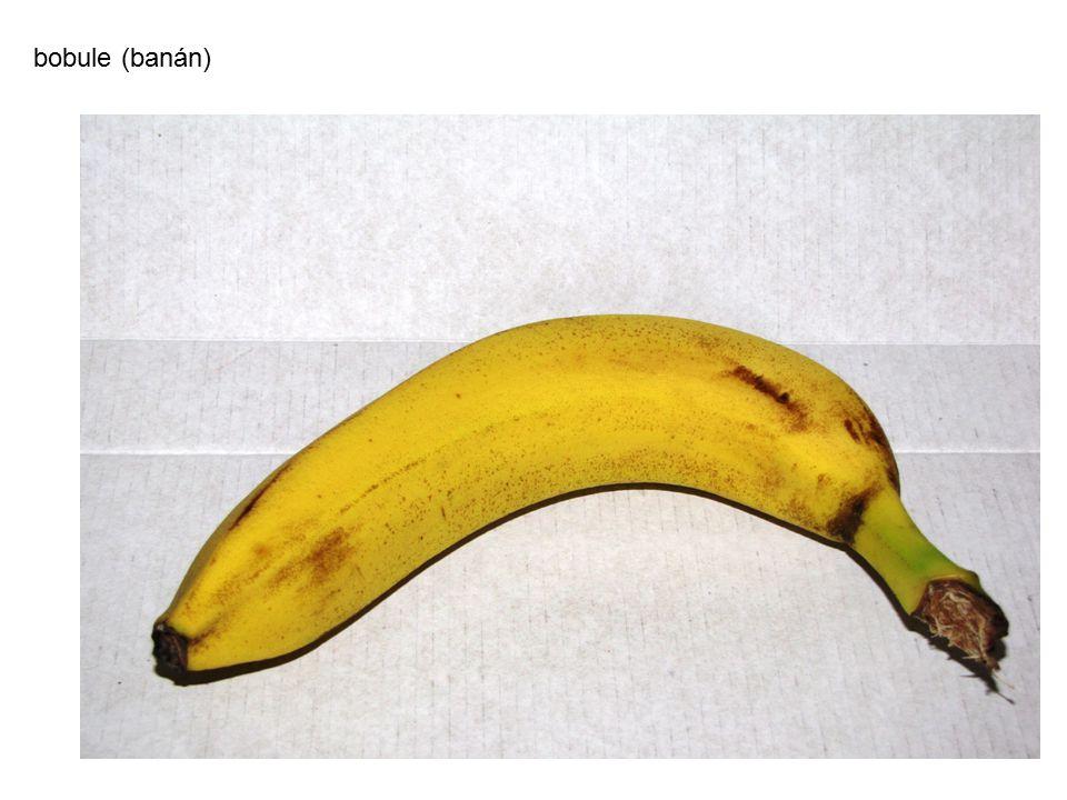 bobule (banán)