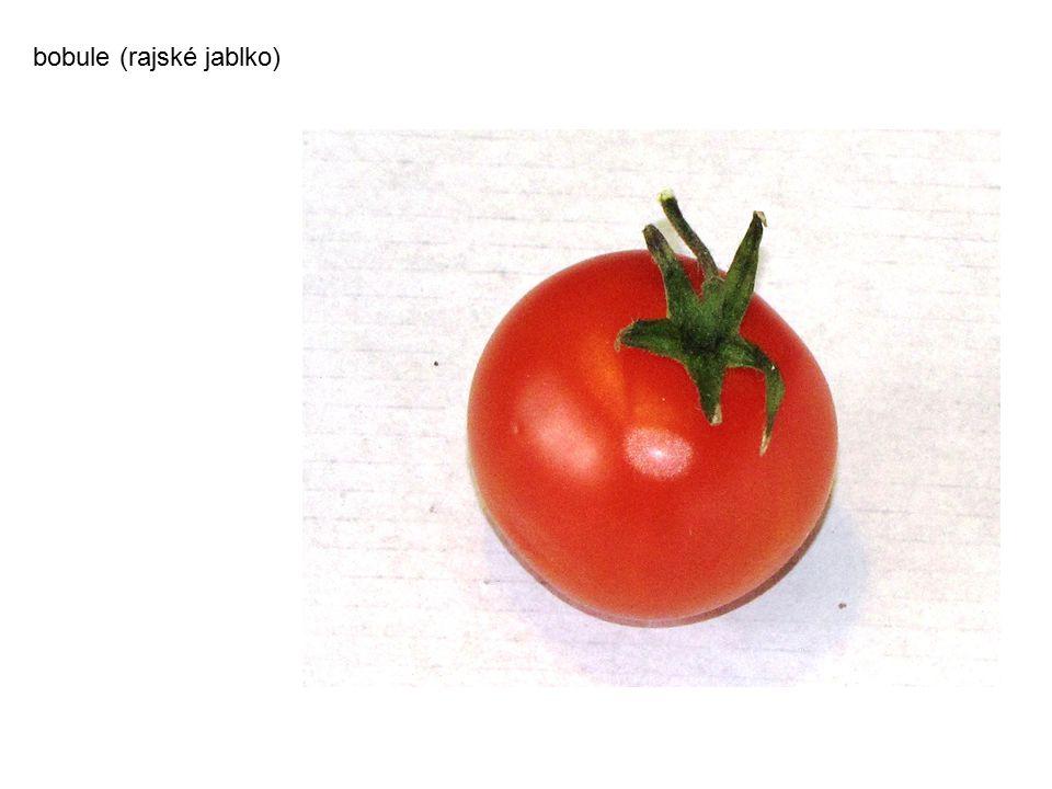 bobule (vinná réva)