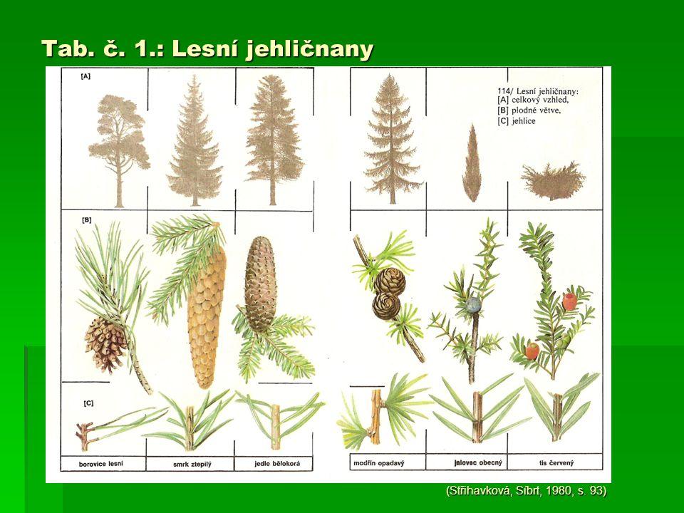 Tab. č. 1.: Lesní jehličnany (Střihavková, Síbrt, 1980, s. 93)
