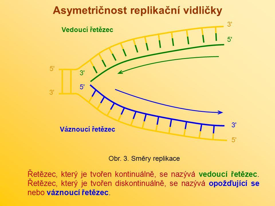 Asymetričnost replikační vidličky Řetězec, který je tvořen kontinuálně, se nazývá vedoucí řetězec. Řetězec, který je tvořen diskontinuálně, se nazývá