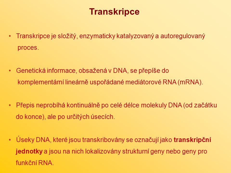 Transkripce Transkripce je složitý, enzymaticky katalyzovaný a autoregulovaný proces. Genetická informace, obsažená v DNA, se přepíše do komplementárn