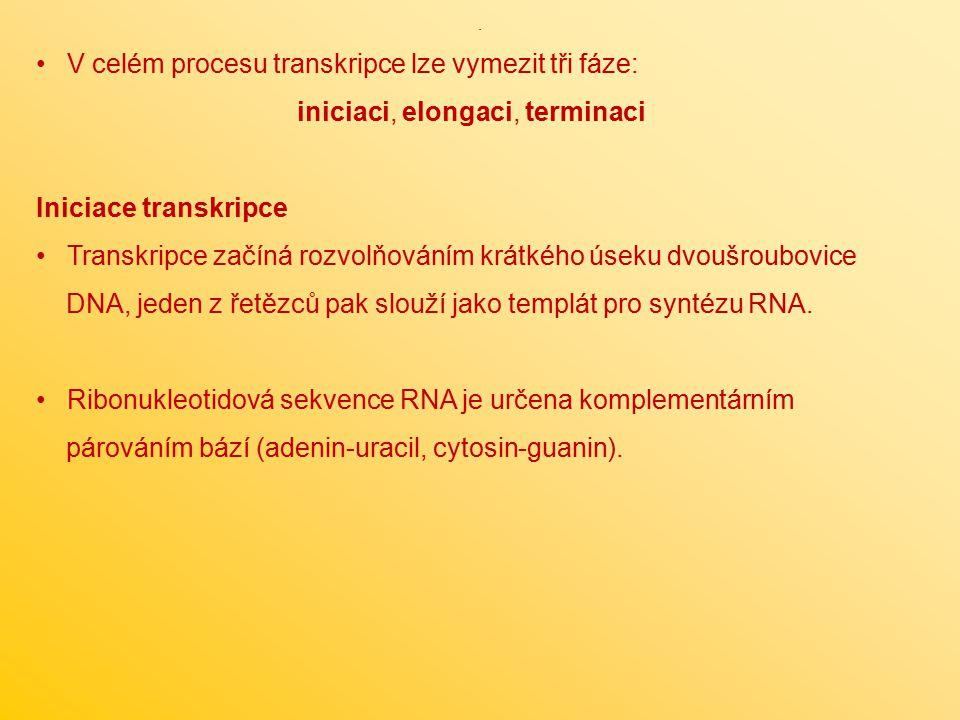 V celém procesu transkripce lze vymezit tři fáze: iniciaci, elongaci, terminaci Iniciace transkripce Transkripce začíná rozvolňováním krátkého úseku d