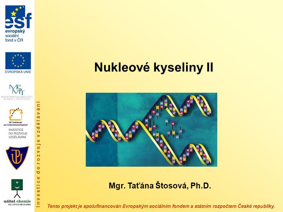 Elongace transkripce Řetězec RNA vznikající transkripcí se nazývá transkript, je dále prodlužován a je komplementární k templátovému řetězci DNA.