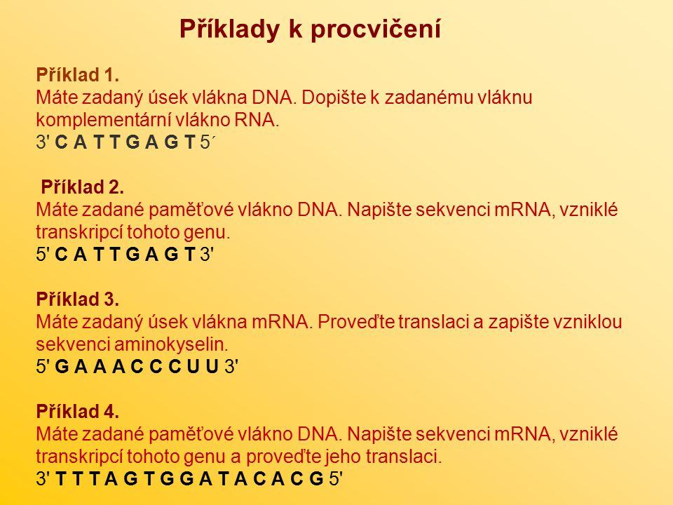 Příklady k procvičení Příklad 1. Máte zadaný úsek vlákna DNA. Dopište k zadanému vláknu komplementární vlákno RNA. 3' C A T T G A G T 5´ Příklad 2. Má