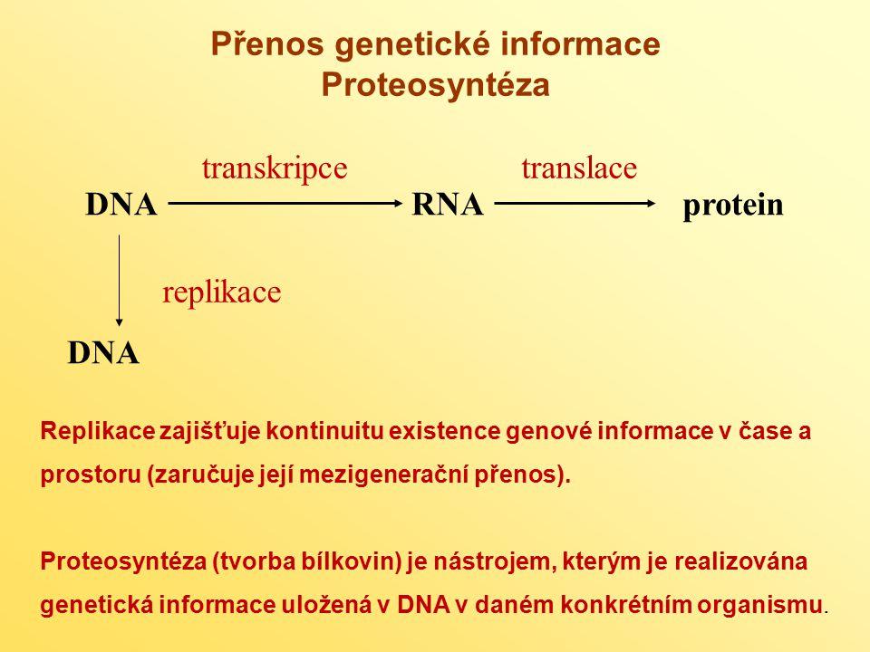 Přenos genetické informace Proteosyntéza DNARNAprotein transkripcetranslace replikace DNA Replikace zajišťuje kontinuitu existence genové informace v