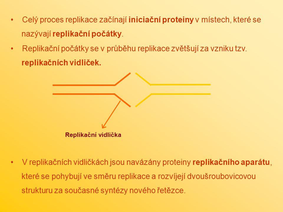 Celý proces replikace začínají iniciační proteiny v místech, které se nazývají replikační počátky. Replikační počátky se v průběhu replikace zvětšují