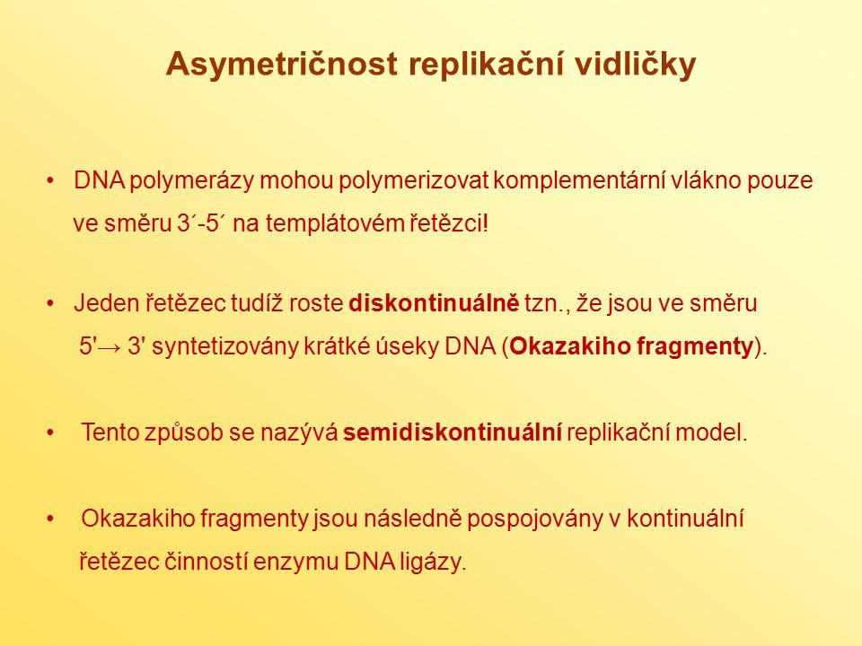 Asymetričnost replikační vidličky DNA polymerázy mohou polymerizovat komplementární vlákno pouze ve směru 3´-5´ na templátovém řetězci! Jeden řetězec