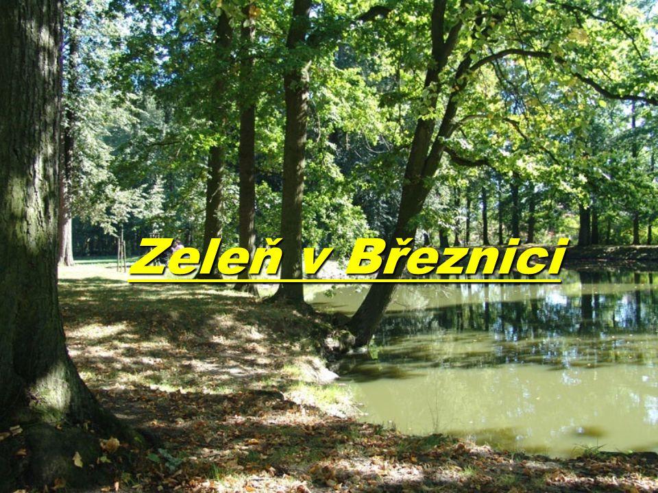 Důvody: Toto téma jsme si vybrali,protože bydlíme v Březnici nebo jeho okolí.