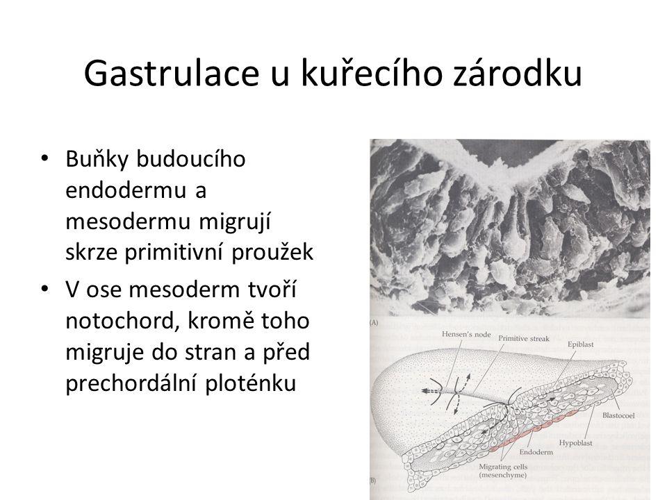 Neurulace:
