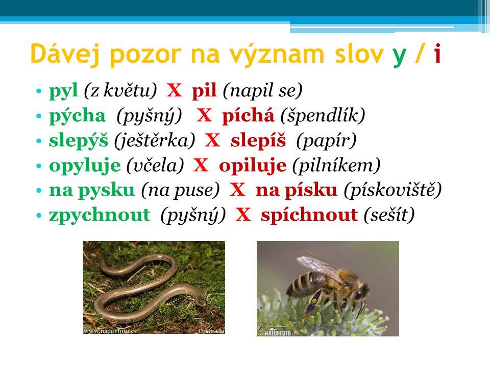 Dávej pozor na význam slov y / i pyl (z květu) X pil (napil se) pýcha (pyšný) X píchá (špendlík) slepýš (ještěrka) X slepíš (papír) opyluje (včela) X