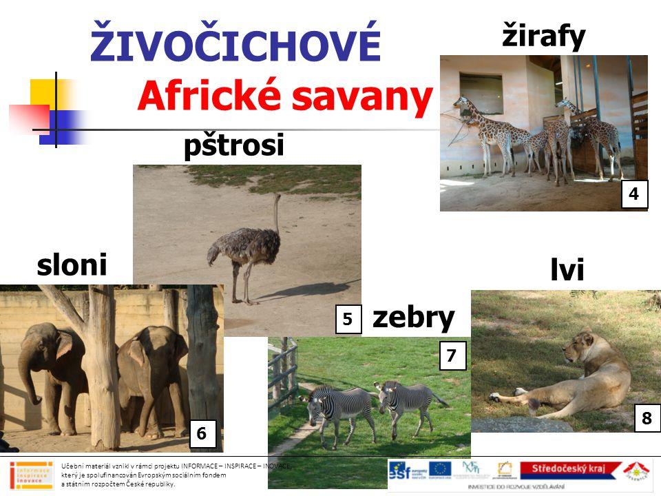 ŽIVOČICHOVÉ Africké savany Učební materiál vznikl v rámci projektu INFORMACE – INSPIRACE – INOVACE, který je spolufinancován Evropským sociálním fondem a státním rozpočtem České republiky.