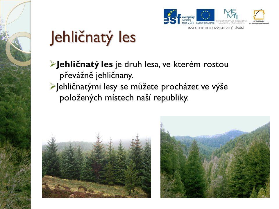 Jehličnatý les  Jehličnatý les je druh lesa, ve kterém rostou převážně jehličnany.  Jehličnatými lesy se můžete procházet ve výše položených místech