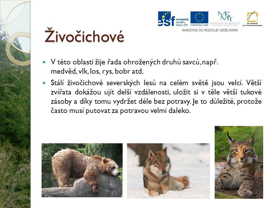Živočichové V této oblasti žije řada ohrožených druhů savců, např. medvěd, vlk, los, rys, bobr atd. Stálí živočichové severských lesů na celém světě j