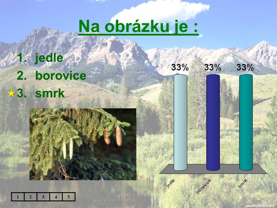 Na obrázku je : 1.jedle 2.borovice 3.smrk 12345