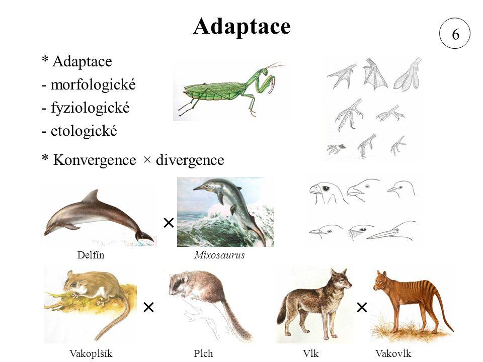 Adaptace * Adaptace - morfologické - fyziologické - etologické * Konvergence × divergence DelfínMixosaurus VakoplšíkPlchVlkVakovlk × ×× 6