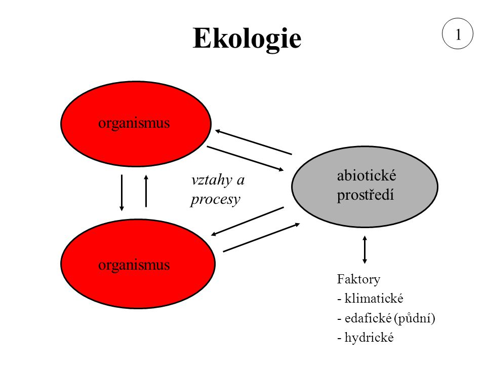 organismus abiotické prostředí vztahy a procesy Faktory - klimatické - edafické (půdní) - hydrické 1