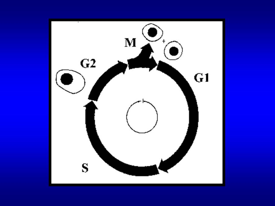 CDK, cykliny a inhibitory CDK