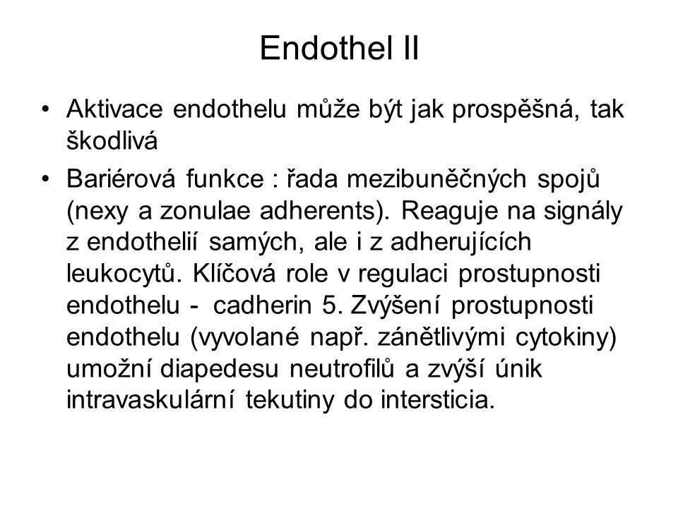 Endothel II Aktivace endothelu může být jak prospěšná, tak škodlivá Bariérová funkce : řada mezibuněčných spojů (nexy a zonulae adherents). Reaguje na