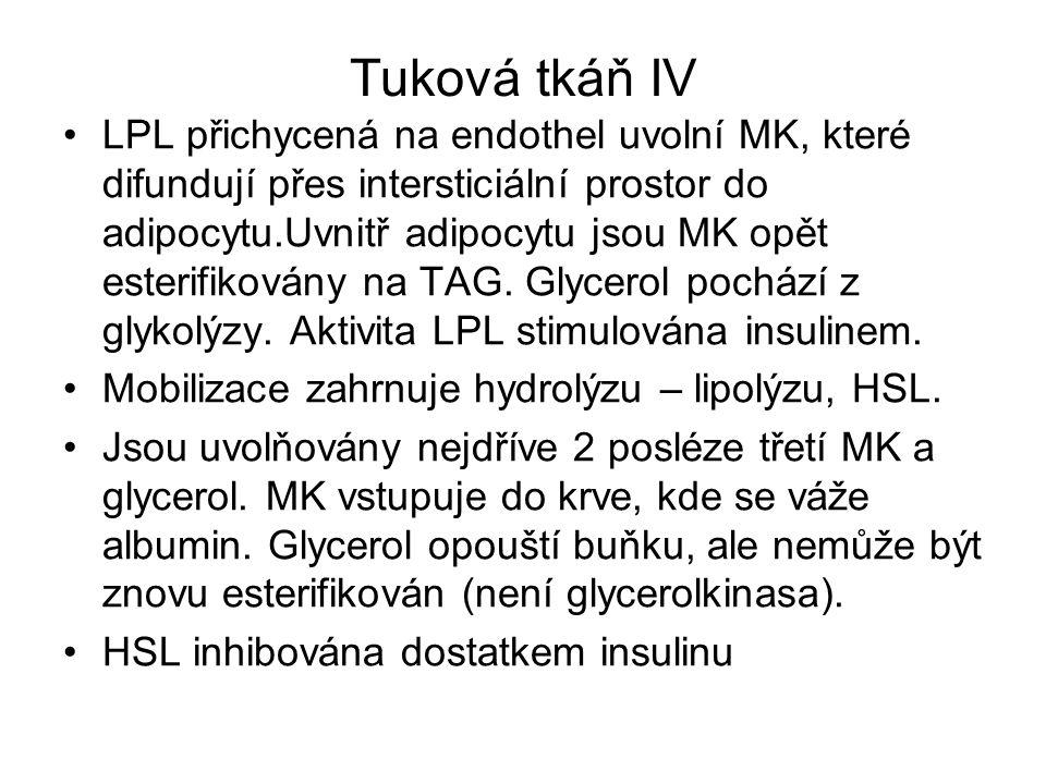 Tuková tkáň IV LPL přichycená na endothel uvolní MK, které difundují přes intersticiální prostor do adipocytu.Uvnitř adipocytu jsou MK opět esterifiko