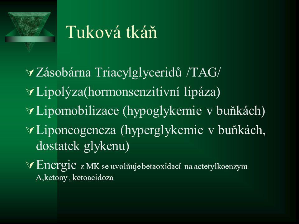 Tuková tkáň  Zásobárna Triacylglyceridů /TAG/  Lipolýza(hormonsenzitivní lipáza)  Lipomobilizace (hypoglykemie v buňkách)  Liponeogeneza (hyperglykemie v buňkách, dostatek glykenu)  Energie z MK se uvolňuje betaoxidací na actetylkoenzym A,ketony, ketoacidoza