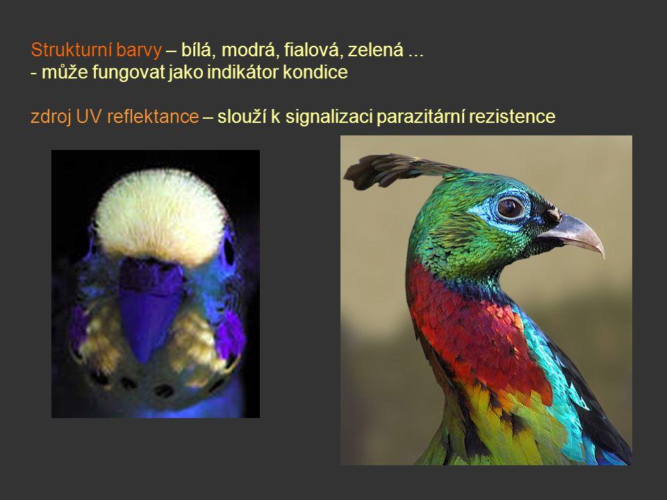 Strukturní barvy – bílá, modrá, fialová, zelená... - může fungovat jako indikátor kondice zdroj UV reflektance – slouží k signalizaci parazitární rezi