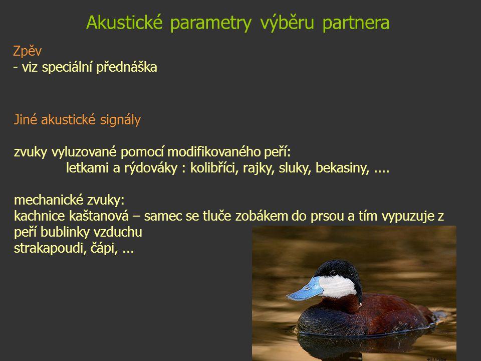 Akustické parametry výběru partnera Zpěv - viz speciální přednáška Jiné akustické signály zvuky vyluzované pomocí modifikovaného peří: letkami a rýdov