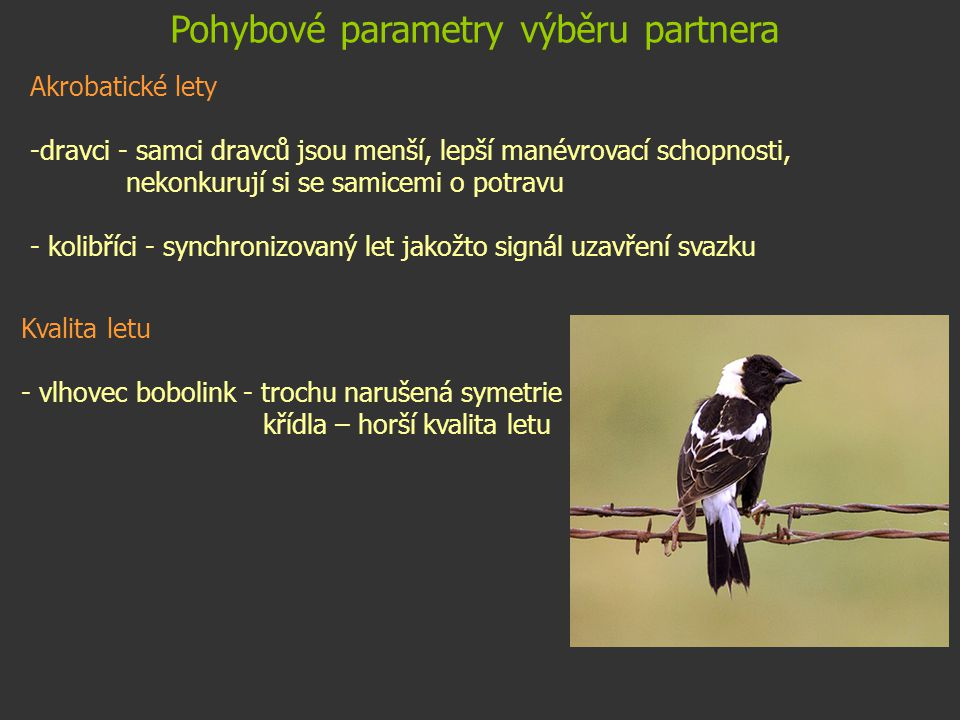 Pohybové parametry výběru partnera Akrobatické lety -dravci - samci dravců jsou menší, lepší manévrovací schopnosti, nekonkurují si se samicemi o potr