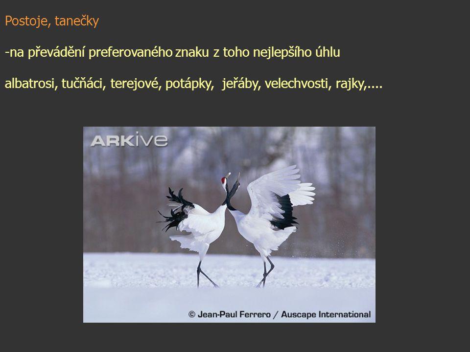 Postoje, tanečky -na převádění preferovaného znaku z toho nejlepšího úhlu albatrosi, tučňáci, terejové, potápky, jeřáby, velechvosti, rajky,....