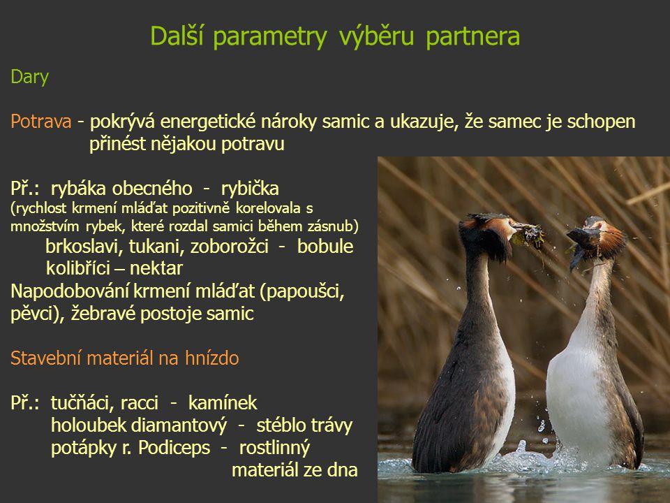 Další parametry výběru partnera Dary Potrava - pokrývá energetické nároky samic a ukazuje, že samec je schopen přinést nějakou potravu Př.: rybáka obe
