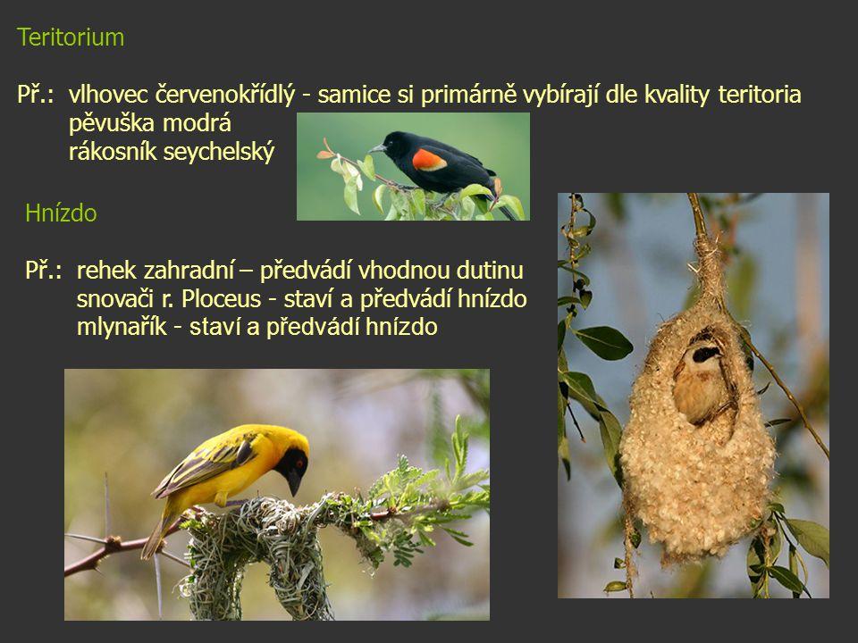 Teritorium Př.: vlhovec červenokřídlý - samice si primárně vybírají dle kvality teritoria pěvuška modrá rákosník seychelský Hnízdo Př.: rehek zahradní