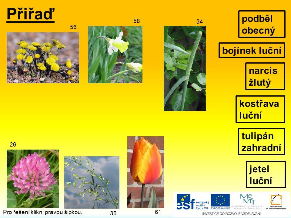 Přiřaď jetel luční narcis žlutý kostřava luční bojínek luční 56 35 61 34 26 58 podběl obecný tulipán zahradní Pro řešení klikni pravou šipkou.