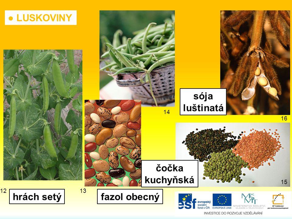 ● LUSKOVINY čočka kuchyňská sója luštinatá fazol obecnýhrách setý 12 16 15 14 13