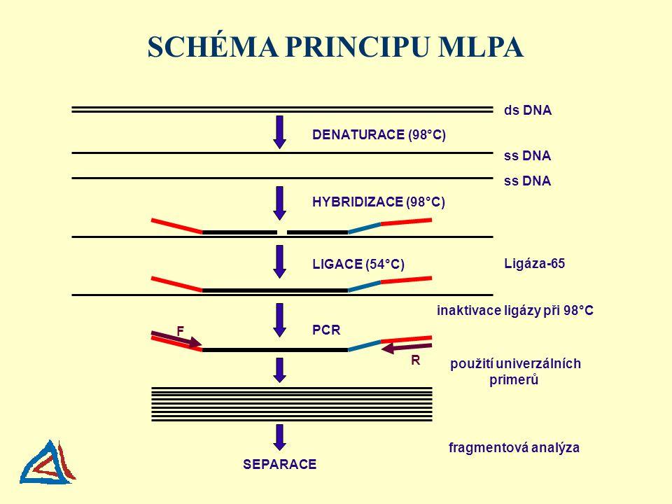DENATURACE (98°C) HYBRIDIZACE (98°C) LIGACE (54°C) PCR SEPARACE ds DNA ss DNA F R Ligáza-65 použití univerzálních primerů inaktivace ligázy při 98°C fragmentová analýza SCHÉMA PRINCIPU MLPA
