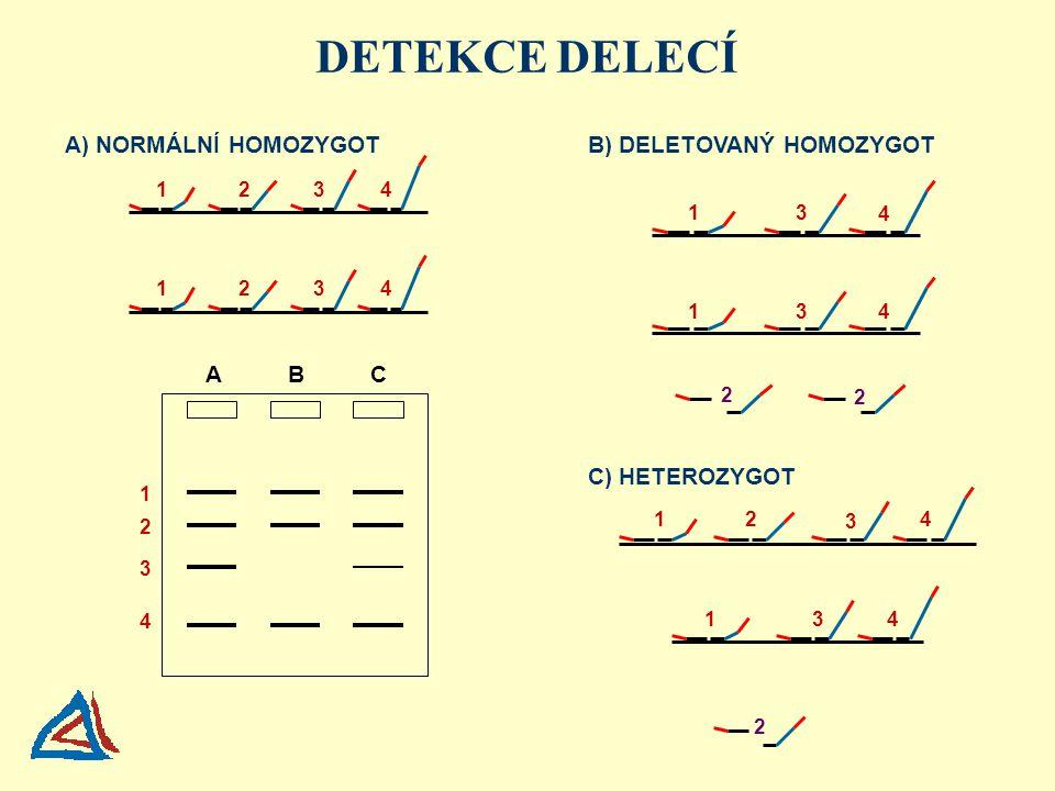 A) NORMÁLNÍ HOMOZYGOT C) HETEROZYGOT DETEKCE DELECÍ B) DELETOVANÝ HOMOZYGOT 1 1 1 1 1 1 2 2 2 3 3 3 3 3 3 4 4 4 4 4 4 4 A B C 3 2 1 2 2 2