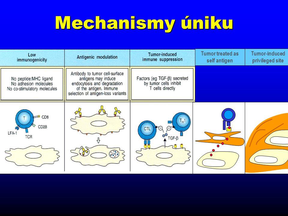 Hlavní efektorové buňky