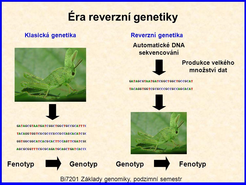 Éra reverzní genetiky Klasická genetika Fenotyp Genotyp Produkce velkého množství dat Automatické DNA sekvencování Genotyp Fenotyp Reverzní genetika Bi7201 Základy genomiky, podzimní semestr