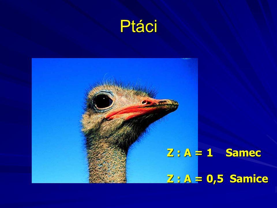 Ptáci Z : A = 1 Samec Z : A = 0,5 Samice