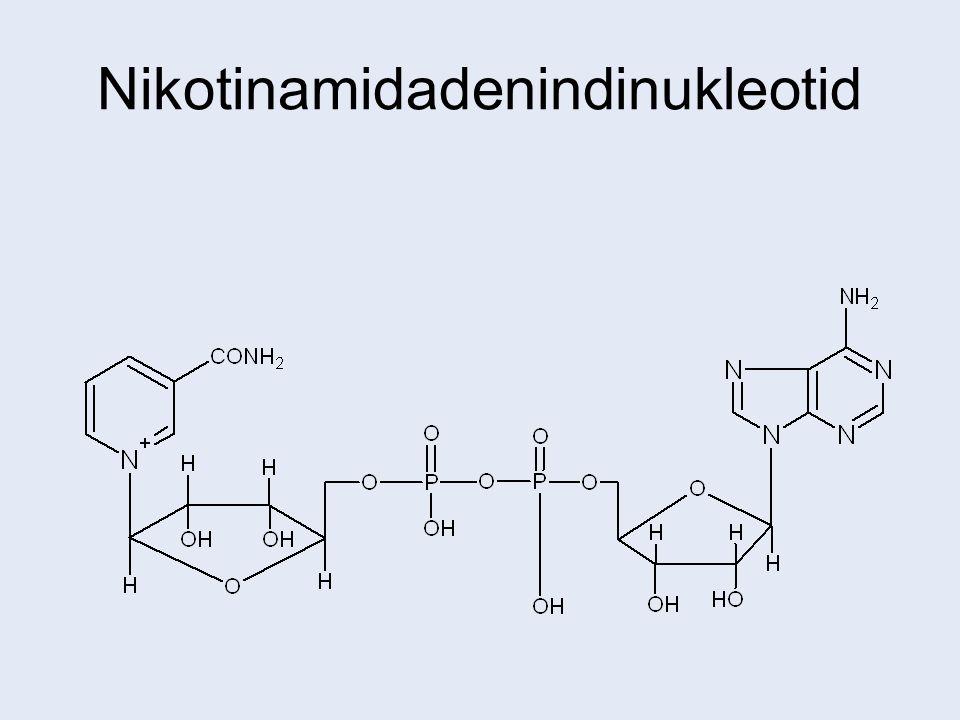 Nikotinamidadenindinukleotid